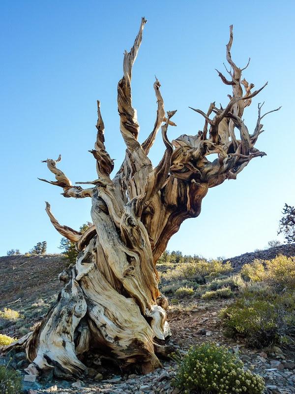 Pine Tree Ter Boynton Beach Fl  United States